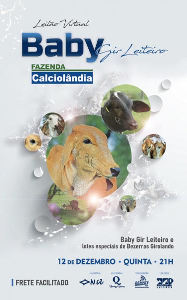 LEILÃO BABY GIR LEITEIRO FAZENDA CALCIOLANDIA