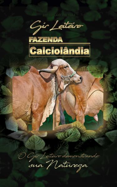34º Leilão Gir Leiteiro Calciolandia