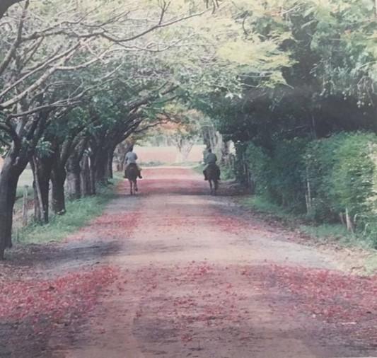 Estada na Fazenda Calciolândia